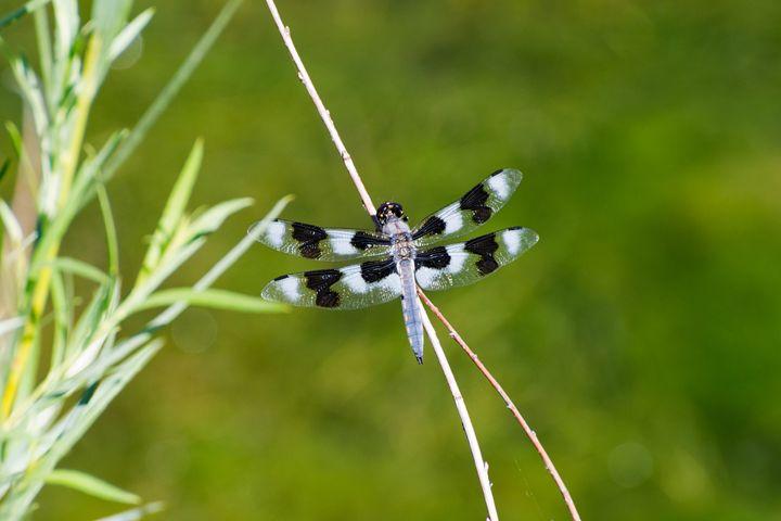 Bella Fly - Natural Beauty
