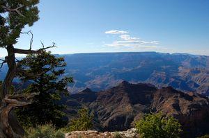 Tree and Canyon - Natural Beauty