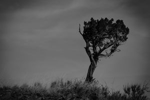 Lonely Tree - Chris Kearns Photography