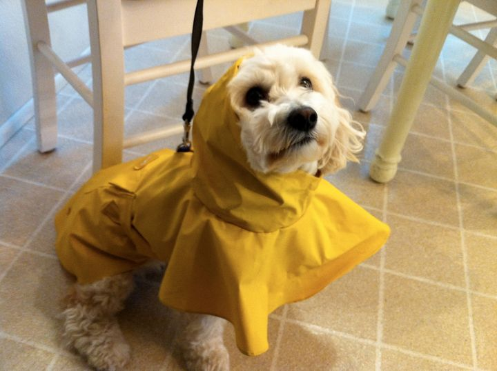 Charlie waiting for the rain - JM Sutton