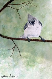 Sweet Titmouse