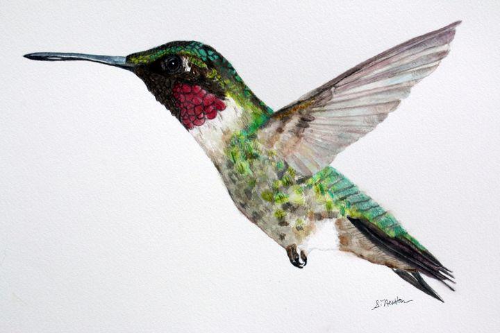 Hummingbird in flight - Sharon Newton