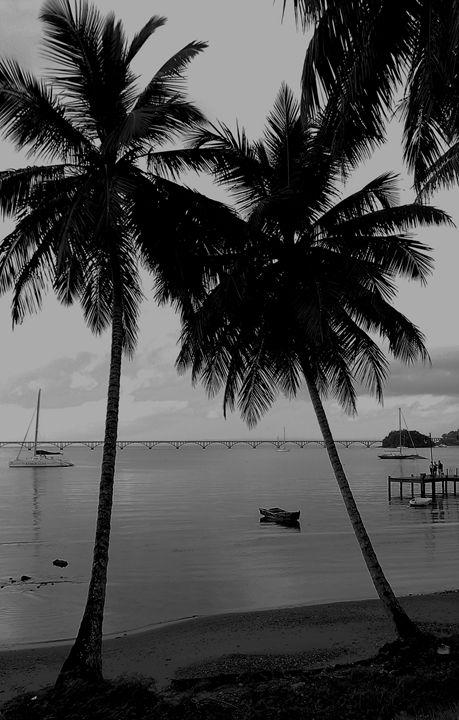 Splitting Palms - Wherever Photography