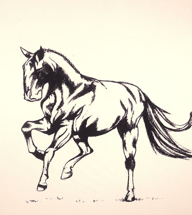 Horse Gallop - BlueAuburn