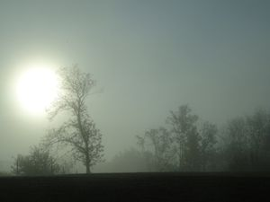 Brouillard matinal (morning fog)