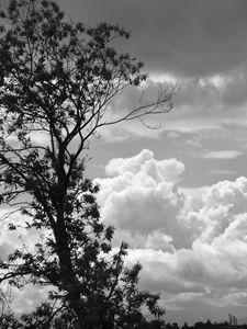 Arbre et nuages