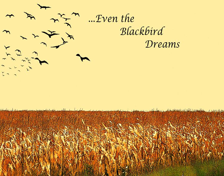 Blackbird Dreams - Will Clark Art