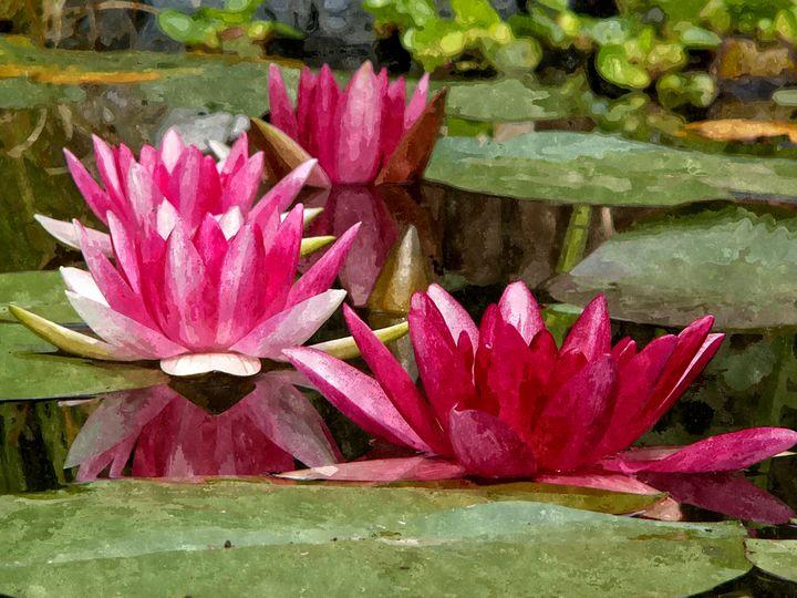 Water Lillies - Will Clark Art