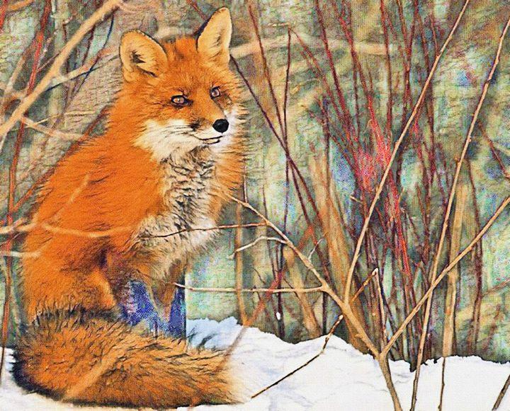The Red Fox - Will Clark Art