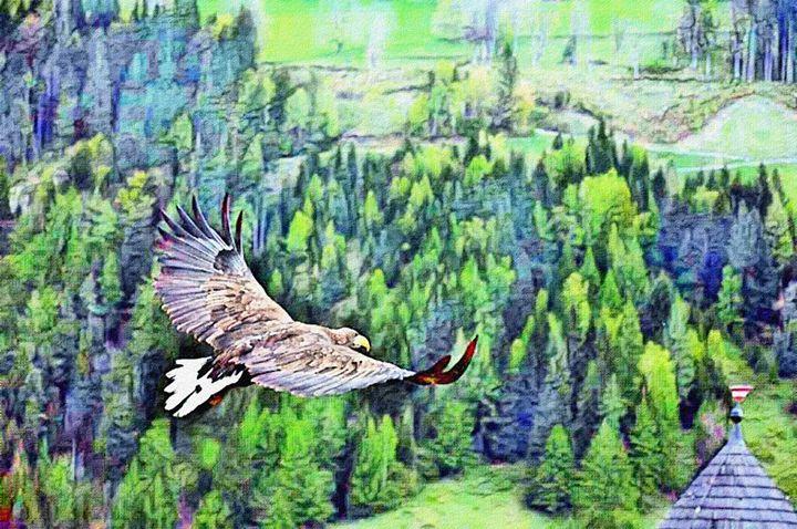 SOARING - Will Clark Art