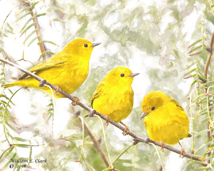 Yellow birds - Will Clark Art