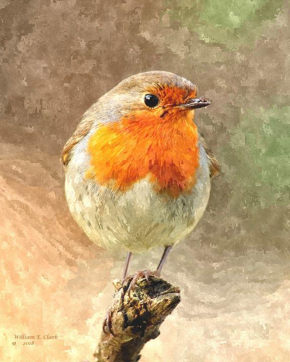 RED BREAST ROBIN - Will Clark Art