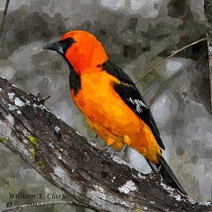 Baltimore Oriole - Will Clark Art