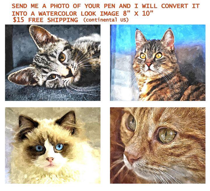 PET PORTRAITS---$15 - Will Clark Art