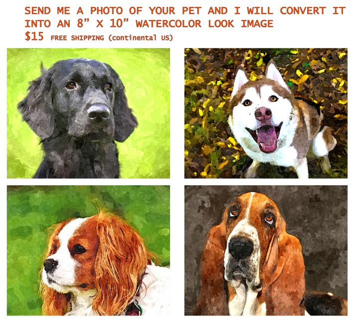 PET PORTRAITS---$15 - Will Clark Art