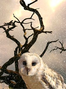 The Snow Owl - Will Clark Art