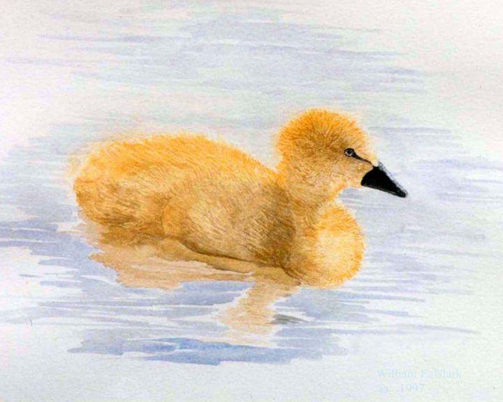 Duckling - Will Clark Art