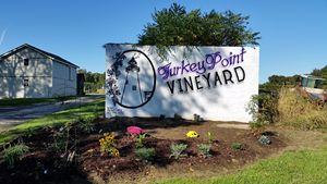 Turkey Point Vineyard - Lang Creations