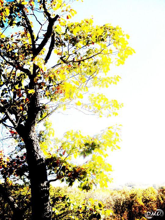 Photosynthesis, Do Your Work! - Dak Art