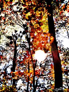 Ember Trees