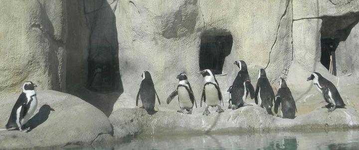 Penguin parade - Crofford Art