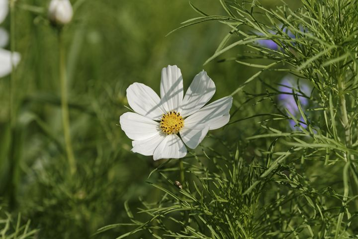 White flower - Adrian Bud