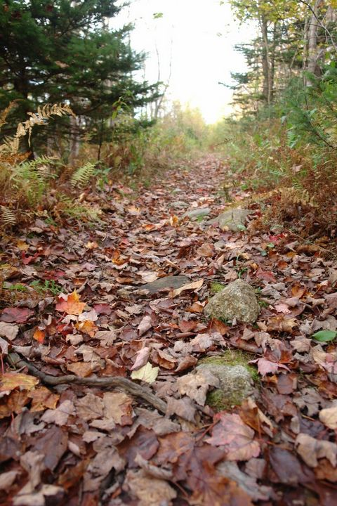 Autumn Path - Created by Melissa