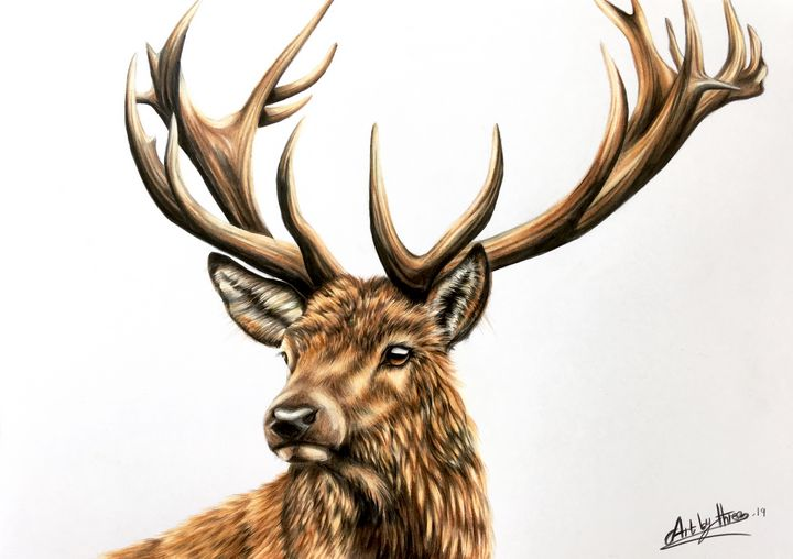 Stag - Art By Three