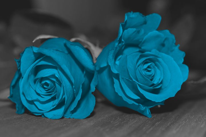Blue Rose - Studio421