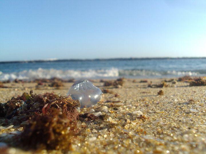 Beach - Kelvin Uaila