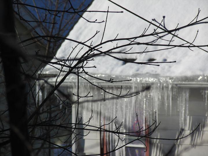 Through the Branchs - Amanda Seilhammer