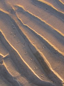Bird Prints in the Sand