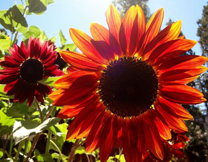 Bright Red Sun - Window Jewlery