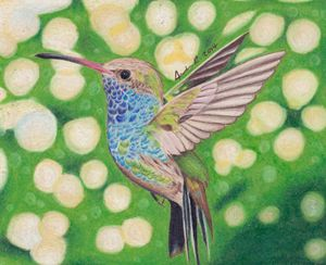 Hummingbird - Drawings by Jordon Ritchie