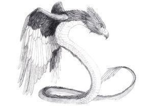 Snake Hawk
