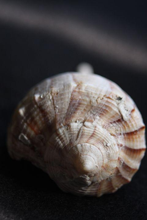 tripped Seashell - sheryl chapman photography