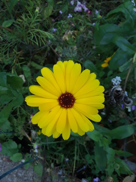Yellow flower - amazingly lovable