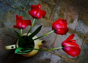 Coffee Pot of Tulips - LDM Photographie