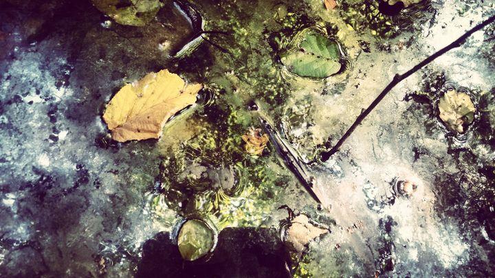 Leaves - LDM Photographie