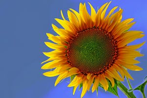 Sunny #1 - LDM Photographie