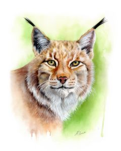 Lynx Watercolour Painting