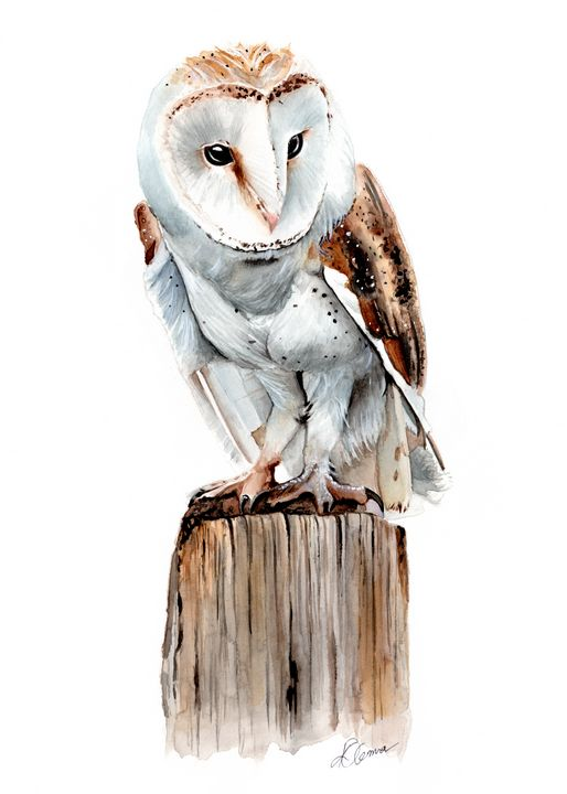 Barn Owl Watercolour Painting - Kieran O'Connor