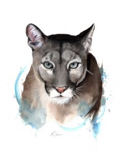 Puma Watercolour Painting