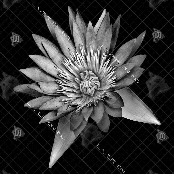lotus-12in - Laser On Inc
