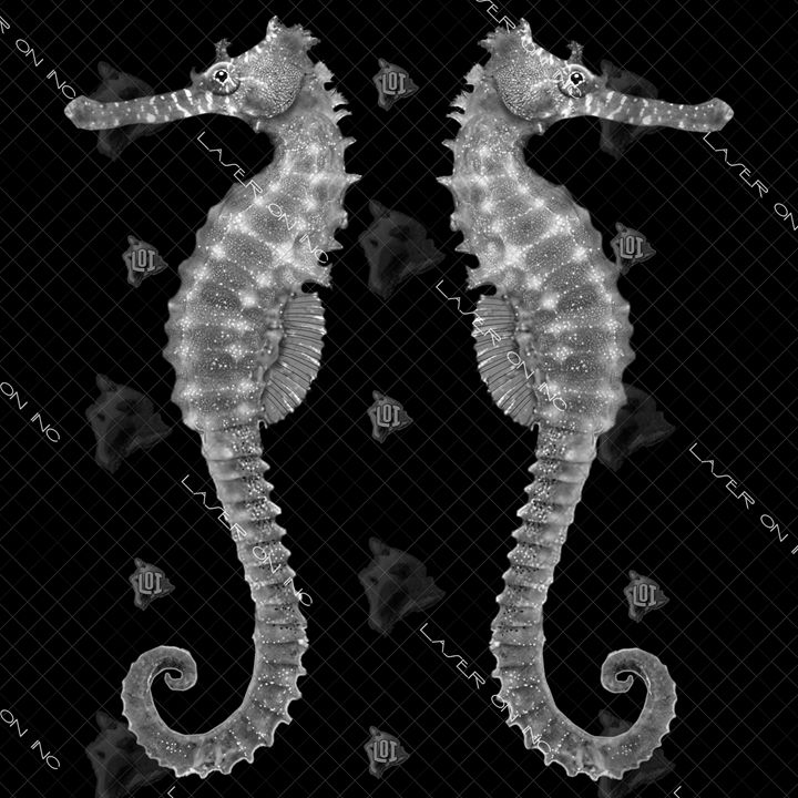 2seahorse-12in - Laser On Inc