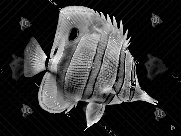 fish0243-sd - Laser On Inc