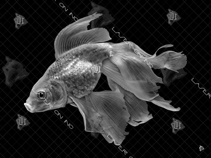 fish1339-sd - Laser On Inc