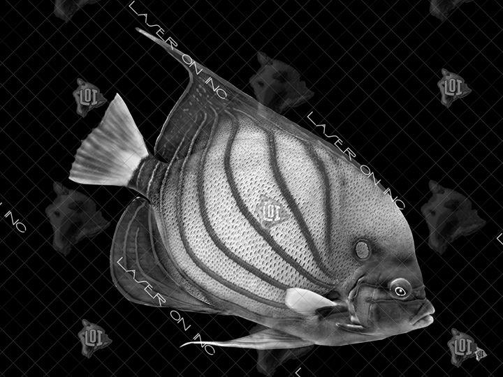 fish1561-sd - Laser On Inc