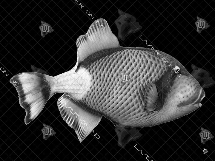 fish6475-sd - Laser On Inc