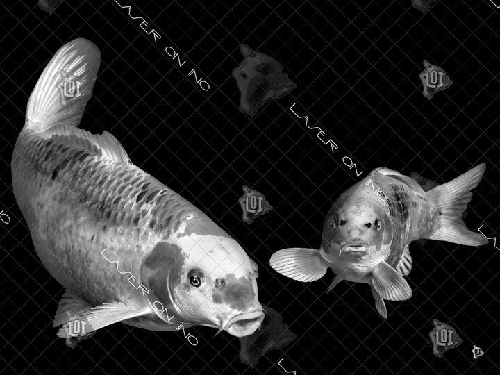 fish6965-sd- - Laser On Inc